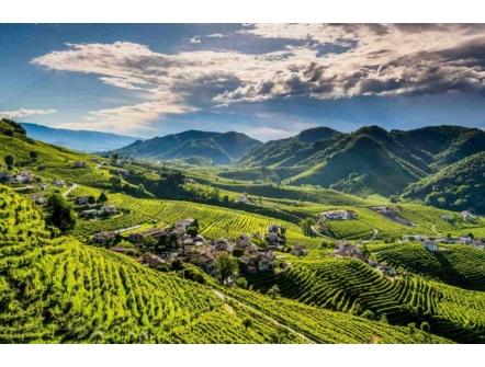 Le Colline del Prosecco di Conegliano e Valdobbiadene sono ora Patrimonio dell'Umanità